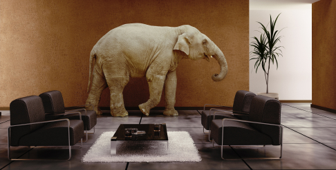 elephanjt in the room